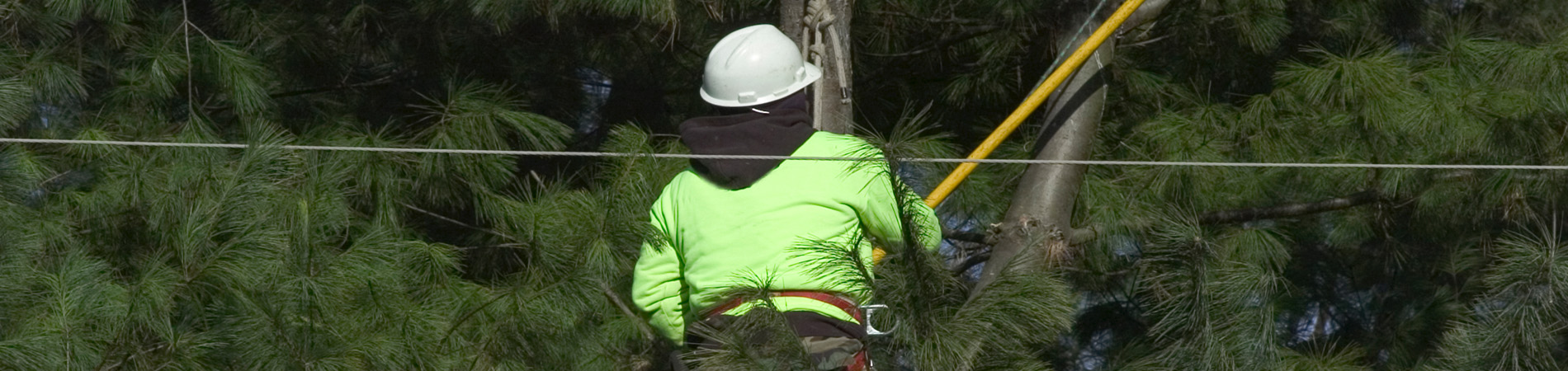arborist hunter valley
